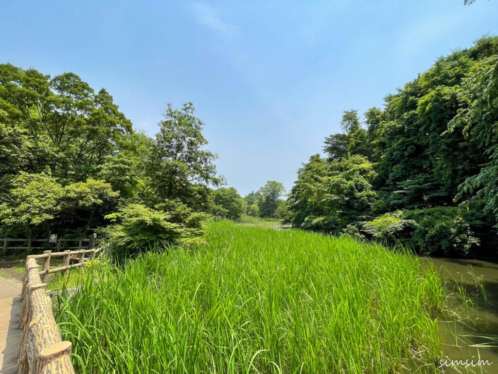 東京の公園