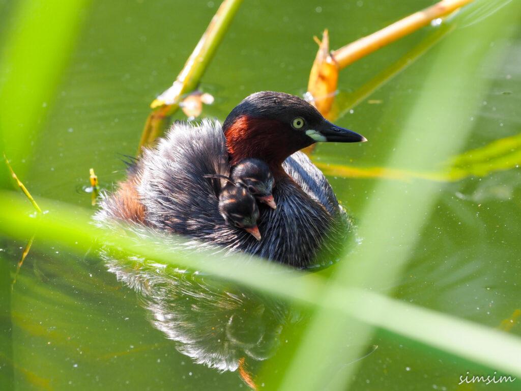 kinjo-birding8
