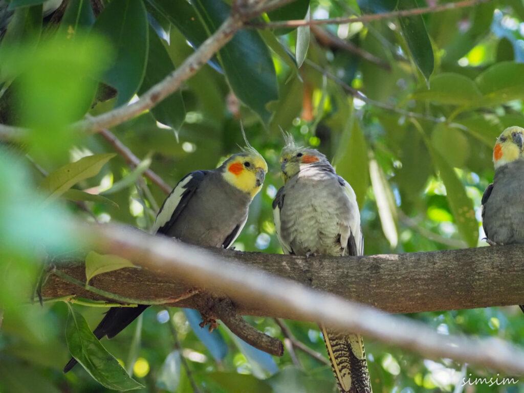 キャンベルタウン野鳥の森